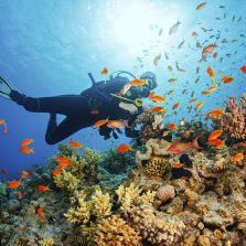 Wakatobi diving tour